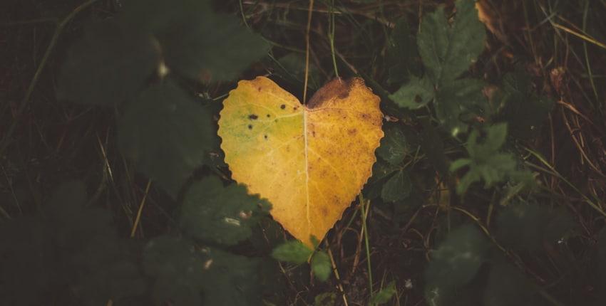 Aimes-tu seulement ceux qui t'aiment ?