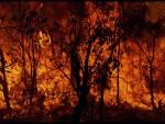 Vie de pureté : « Enfant brûlé, vas-tu jouer avec le feu ? » (2/2)