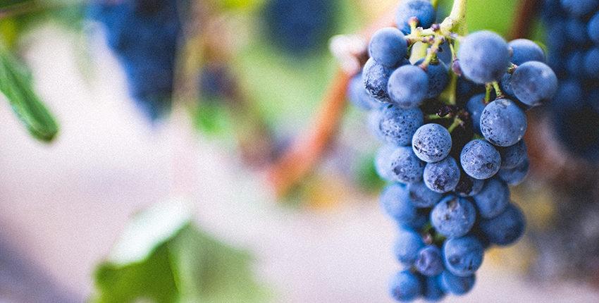 Porter du fruit : la méthode révolutionnaire (Jean 15)