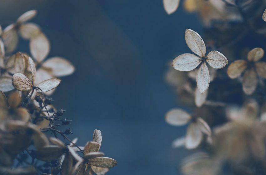 Le fruit amer de la crainte de l'homme – Comment identifier un péché subtil